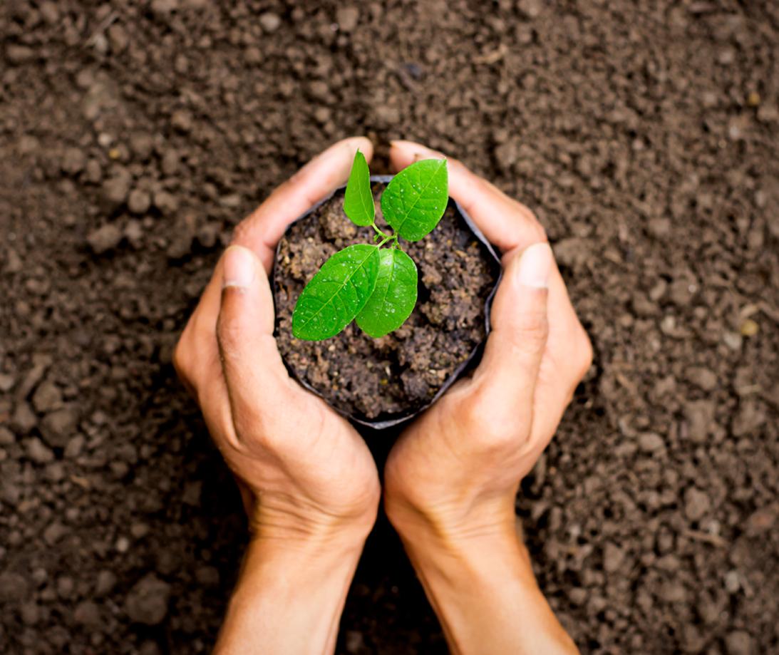 Planting, Gardening & Flower Beds