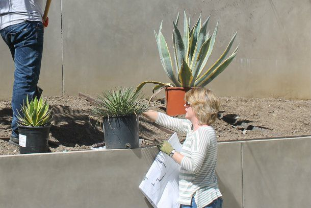plant purchasing and placement