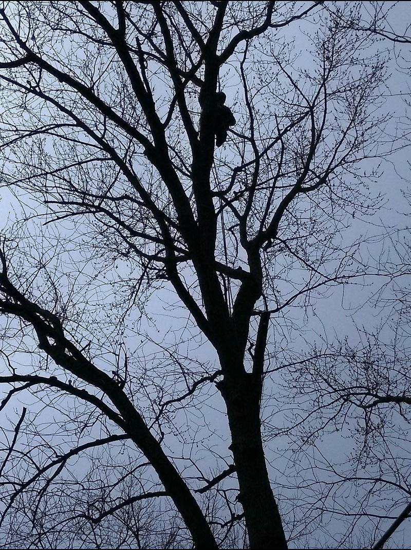 eagle tree service