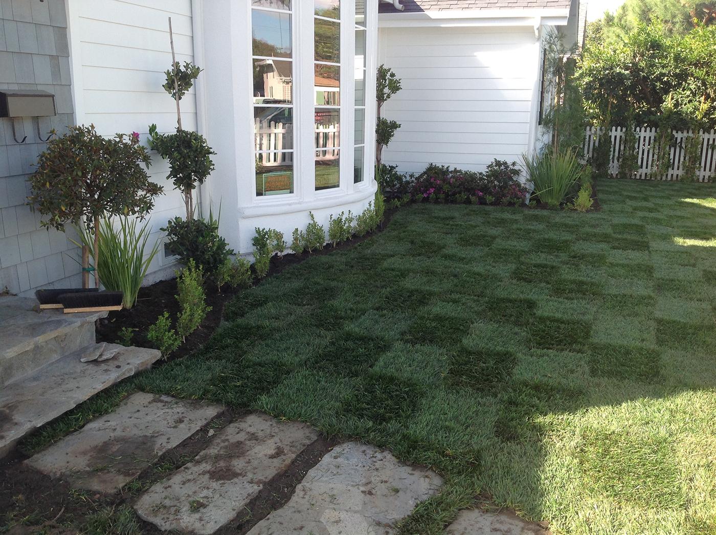 lawn sod care