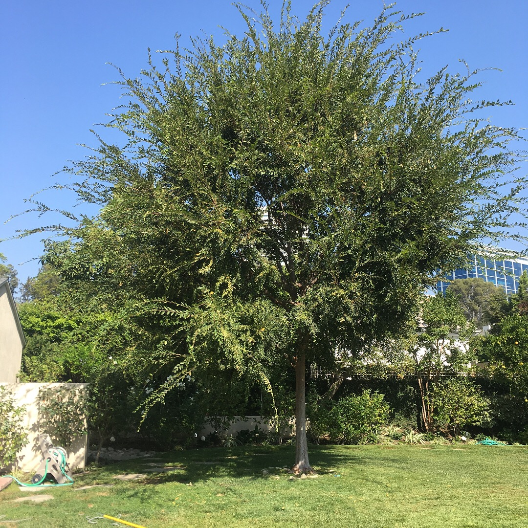 before tree trimming