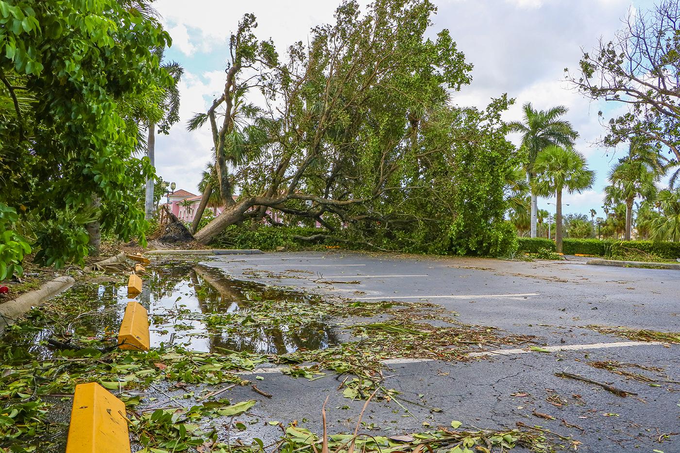 tree fallen from storm