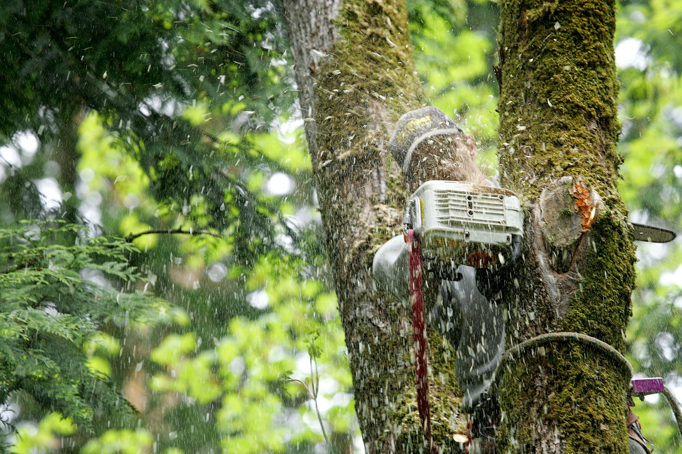 professional grinding a tree with machine