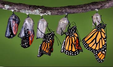 Transformational training